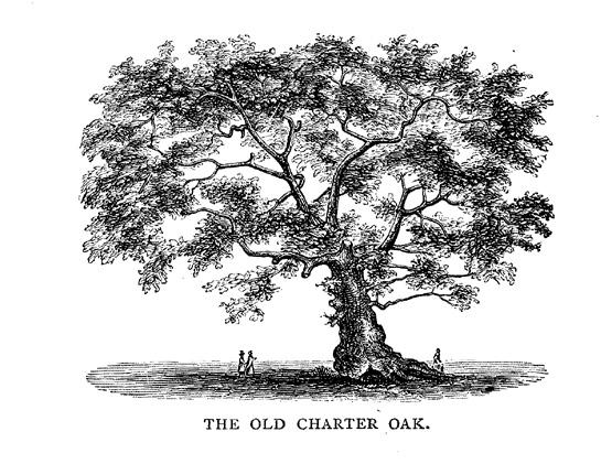 cherter-oak